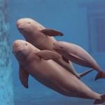 La cara oculta de los delfines